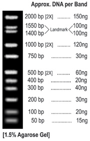 ALL PURPOSE LO™ DNA MARKER, BN2051 WIDE RANGE: 50 bp - 2,000 bp, with evenly spaced bands EASY TO READ: Doublet bands at 1400 & 1550 bp with double intensity bands at 500, 1000, and 2000 bp CONVENIENT: Stable at Room Temperature for 2 or more years READY TO USE: Perfect standard for accurate quantitation